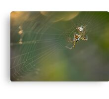 Spider and it's Web Canvas Print