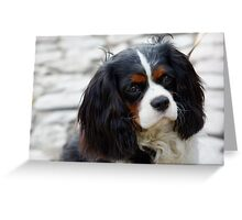 King Charles Cavalier Portrait Greeting Card
