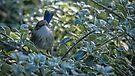 Little Bird by yolanda