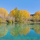 Golden Reflections - Twizel New Zealand by Beth  Wode