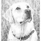 yellow lab in tall grass drawing by Mike Theuer