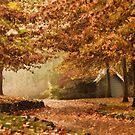 More Autumn Wonderland  by yolanda