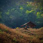 The Jungle retreat  by WillBov