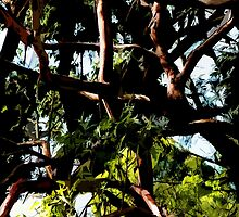 Abstract trees by ronsphotos