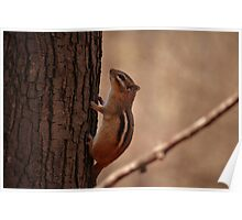 Chipmunk at Holliday Nature Preserve Poster