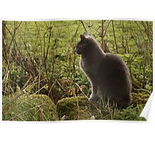 Cat In The Country Poster