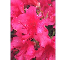 Rainy Day Flowers Photographic Print