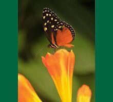 Butterfly #1 Unisex T-Shirt