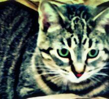 BEAUTIFUL KITTY BELLA IN A BAG Sticker