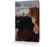 Balcony cat Greeting Card