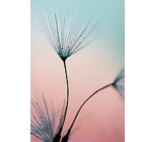 sprinkles of love Photographic Print