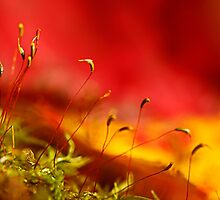 automn moss by Manon Boily