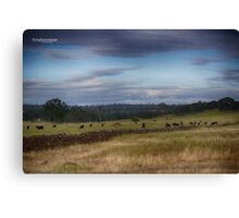 cows in pasture Canvas Print