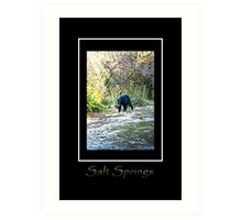 Salt Springs Bear Art Print
