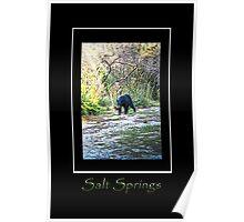 Salt Springs Bear Poster