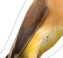 Cedar Waxwing Cutout Sticker