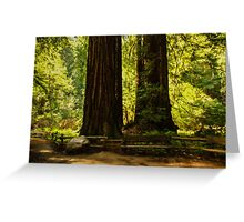 Impressions of Muir Woods, California Greeting Card