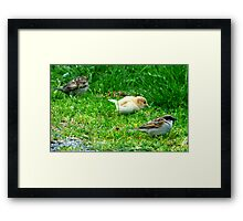 Sparrow Blonde Framed Print
