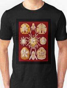 Sand Dollars on Red Unisex T-Shirt