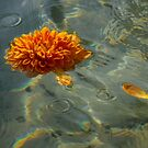 Liquid Rainbows – Chrysanthemum Blossom Floating in the Sunshine by Georgia Mizuleva