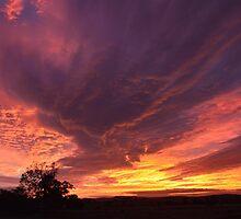 Purple Sunrise by fenwickstud