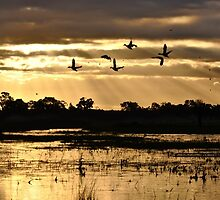 Swallows, Ducks and floods at Sunset by fenwickstud
