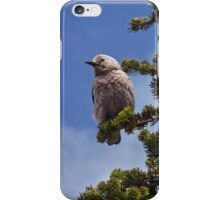 Clark's Nutcracker in a Fir Tree iPhone Case/Skin