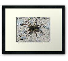 Creepy Crawly Spider  Framed Print