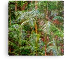 Tamborine Mountain Rainforest - Dave Catley, Australia Metal Print