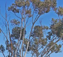 Roadside Tree, Meningie, South Australia Sticker