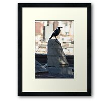 Quoth The Magpie Framed Print