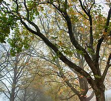 Autumn Leaves and Fog_Mt Wilson by Sharon Kavanagh