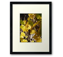 Yellow Autumn Leaves Framed Print