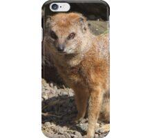 Yellow Mongoose iPhone Case/Skin
