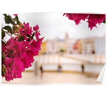 Seville - Flowers and Calle Betis Poster