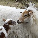 Mother Love and a little lamb by ienemien