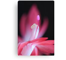pink Bloom macro Canvas Print