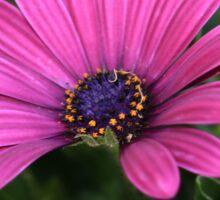 Purple bloom macro Sticker