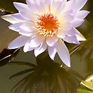 0687 Water Lilly by DavidsArt