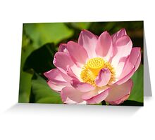 0481 Red Lotus  Greeting Card