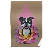 Zen Boston Terrier - Lotus Flower Poster