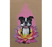 Zen Boston Terrier - Lotus Flower Photographic Print