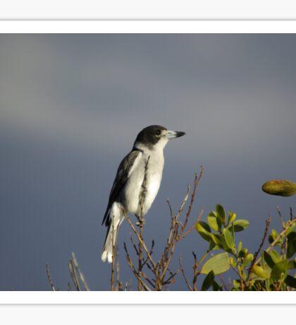BUTCHER BIRD Sticker