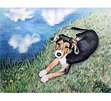 Puppy Max Photographic Print