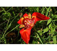 Yellow and Red Flower Blooming Photographic Print