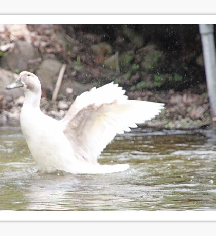 White Female Duck Sticker