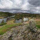 Tarn Hows Lake District  by eddiej