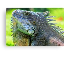 green iguana (iguana Iguana) with spines and dewlap  Metal Print