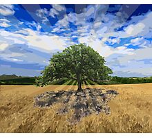 The Lone Oak Photographic Print