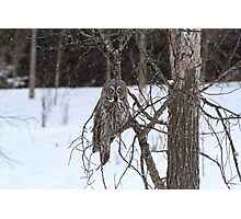Great Grey Owl in a snow storm Photographic Print